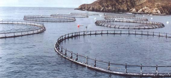 La subsecretar a de acuacultura desarrolla proyecto piloto for Vivero para peces