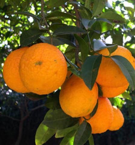 Manab 237 Noticias En L 237 Nea Frutas Que Se Producen En